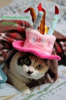 birthday20162.jpg