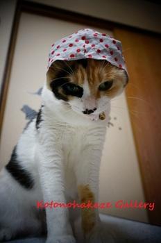 cat thief1.jpg