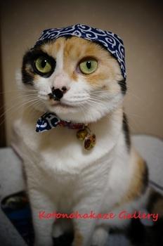 cat thief3.jpg